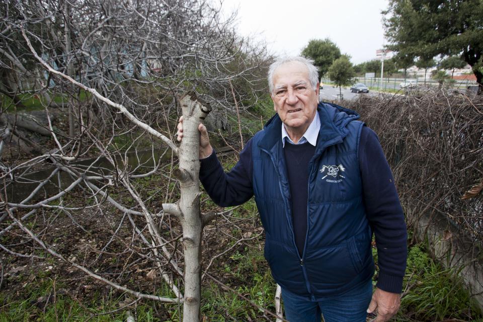 'Kome su zasmetala moja stabla?', pita se Radanović Jakov Prkić/EPH