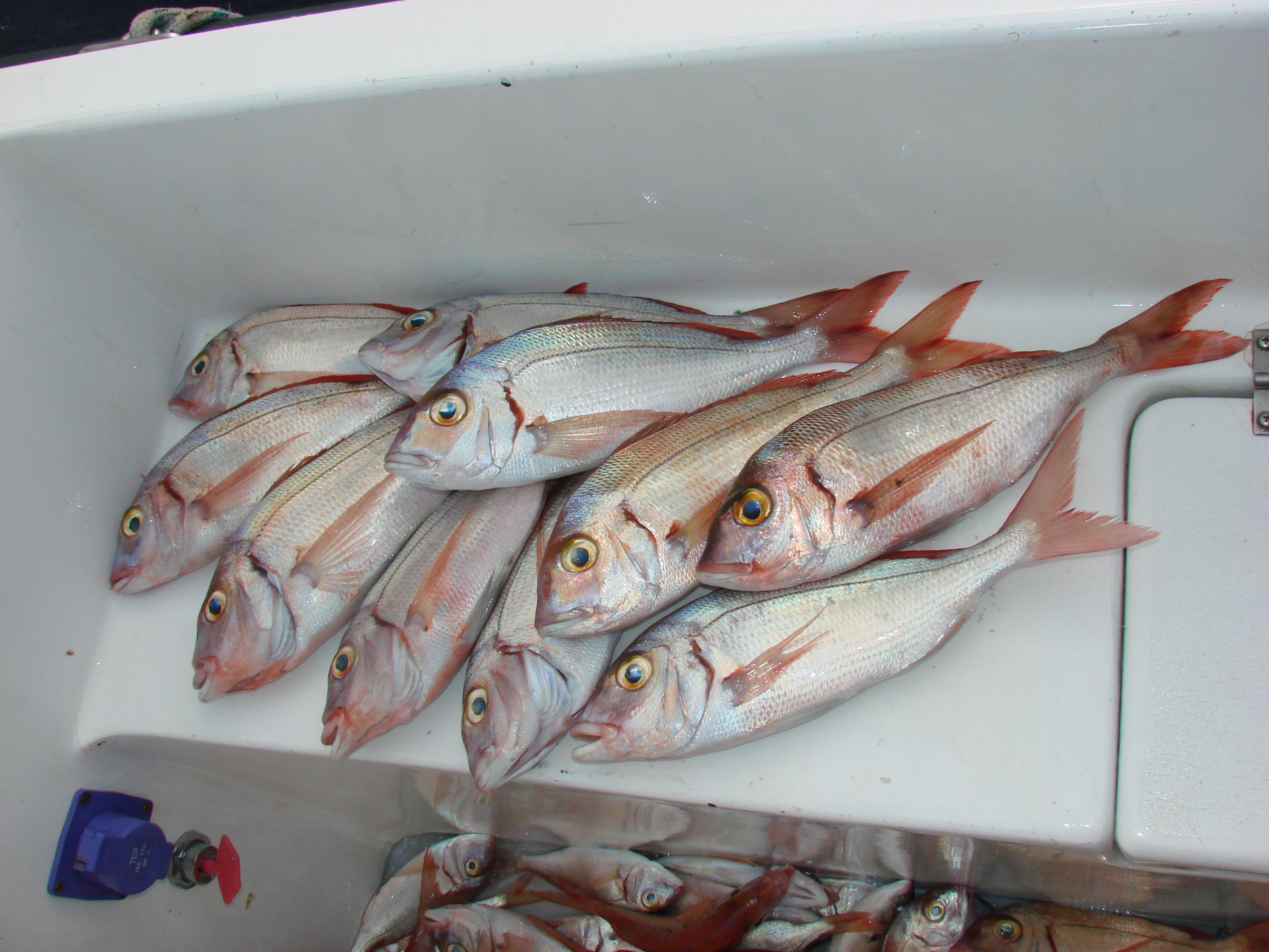 puno riba izlazi na mreži