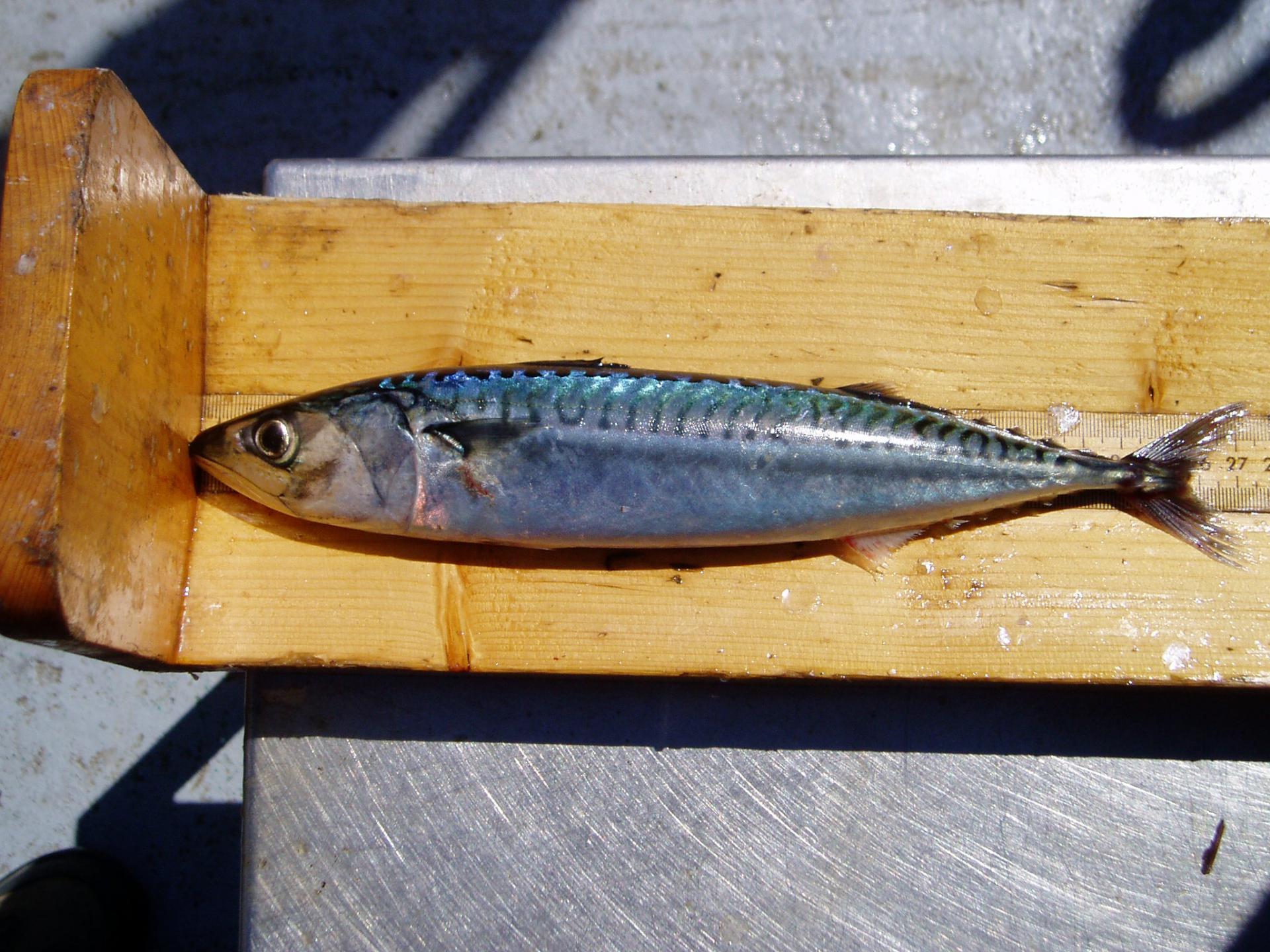 mjesta za velike ribe možete li spojiti telefon verizon na plan za djevičanske mobilne uređaje