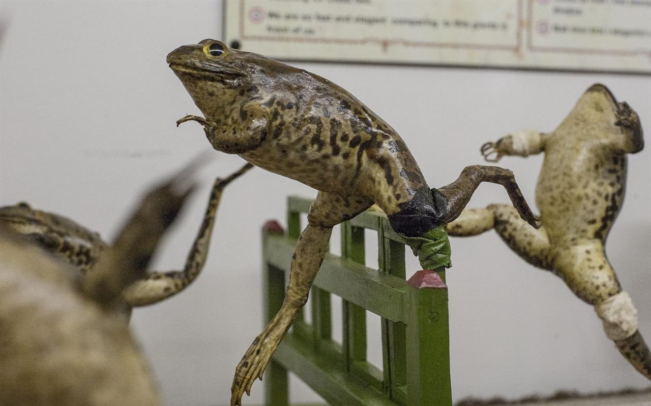 froggyland10-210518