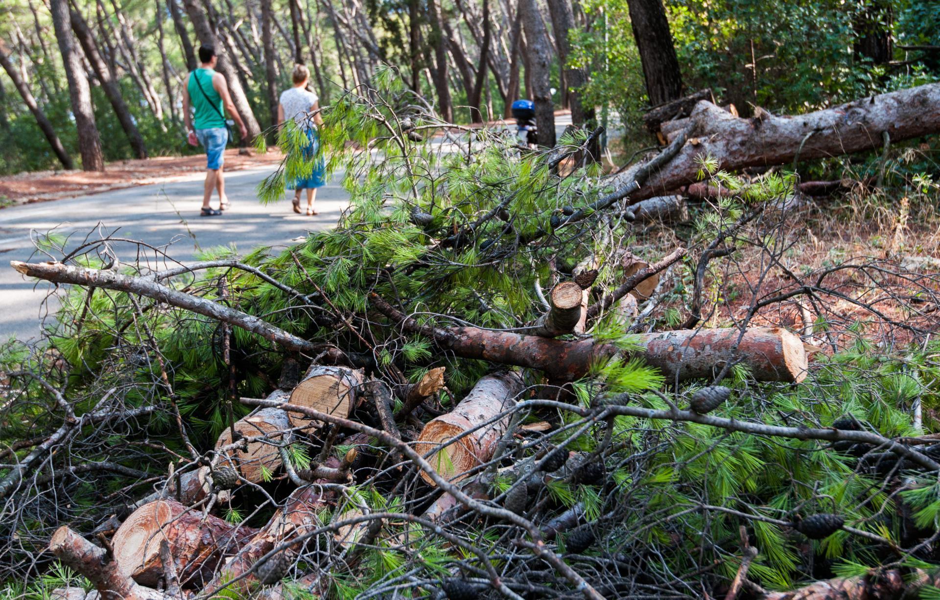 Peti bor u nepuna dva mjeseca pao je na cestu kod Bena