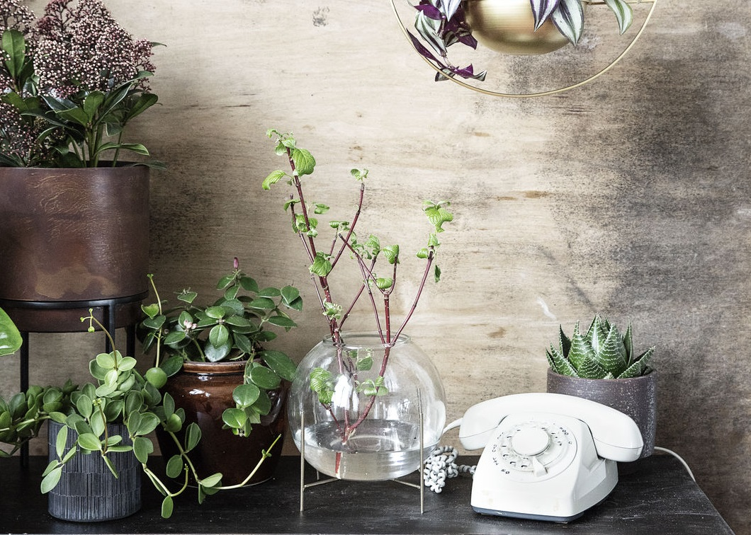 hd_aw18_greenplants20_ch