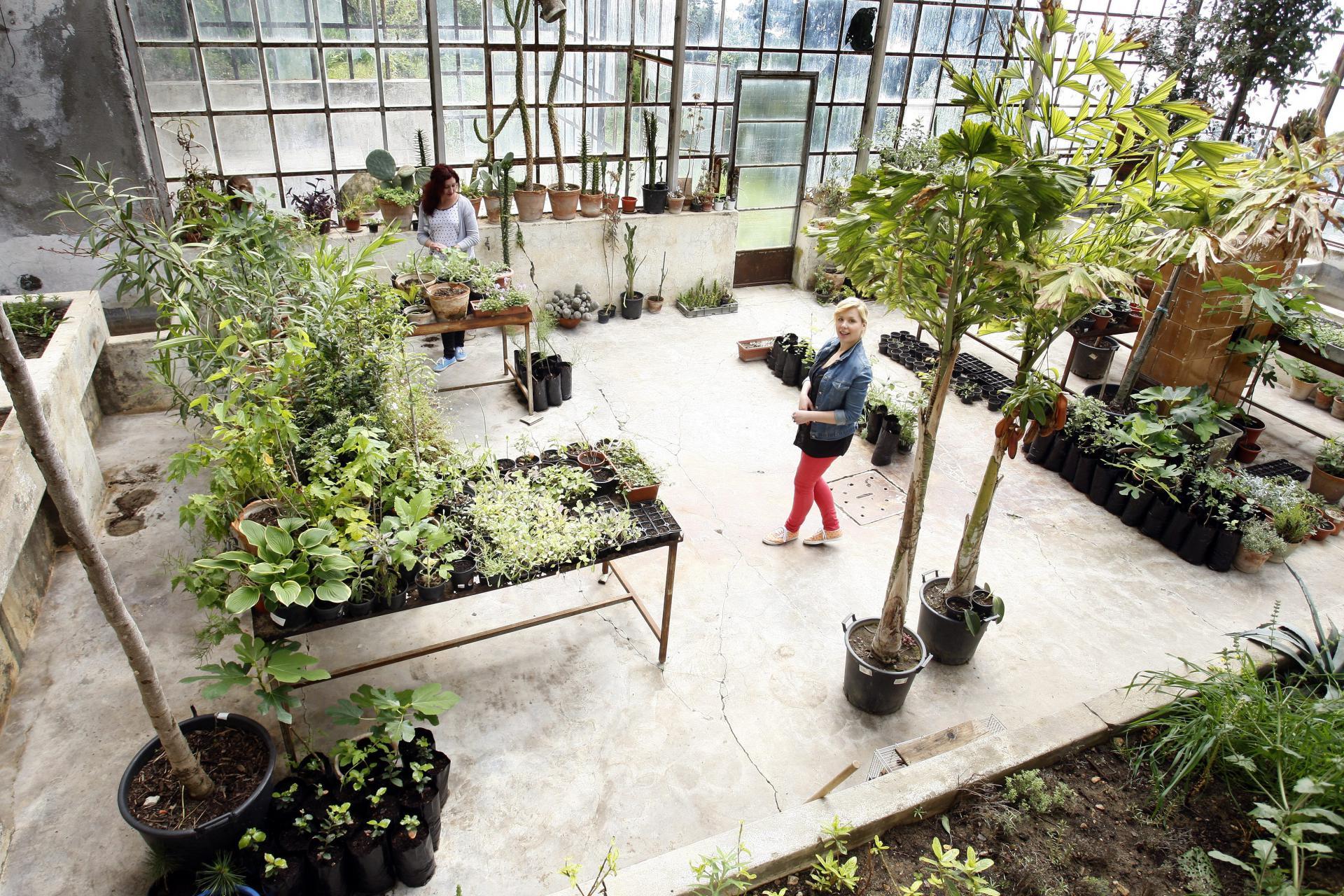 Slobodna Dalmacija Obnavlja Se Splitska Zelena Oaza Botanicki