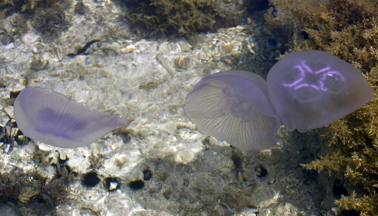meduza4-240511