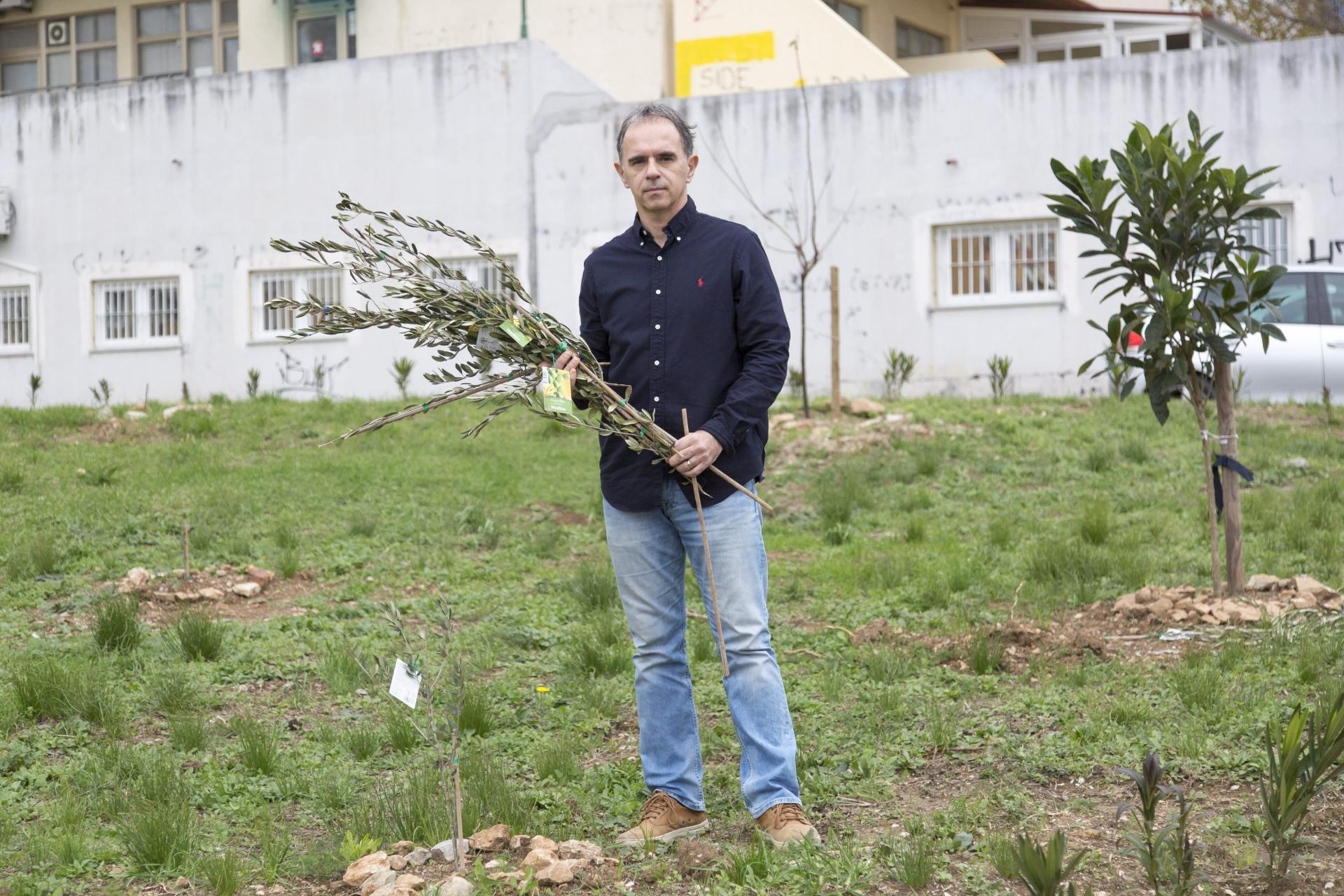 'Nepozvani gosti polomili su nam 23 masline', naglašava voditelj ekološke grupe u školi