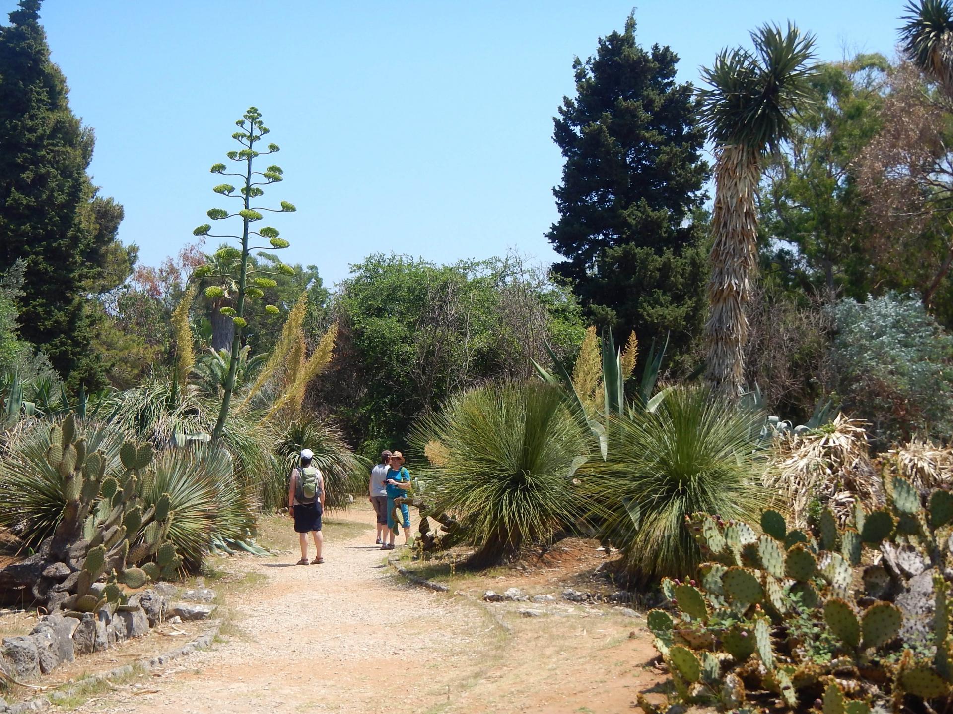 Dubrovacki Dobra Vijest Za Posjetitelje Obnova Botanickog Vrta