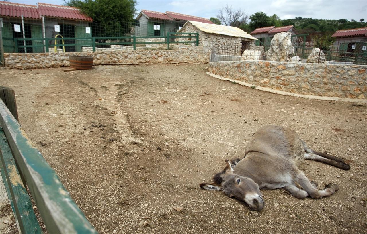 zoo_restoran_anita4-270510