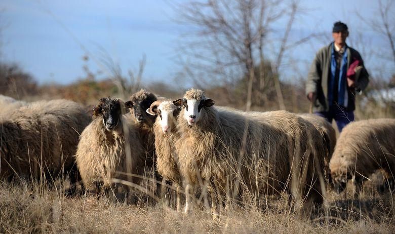 ovce_promina14-221214