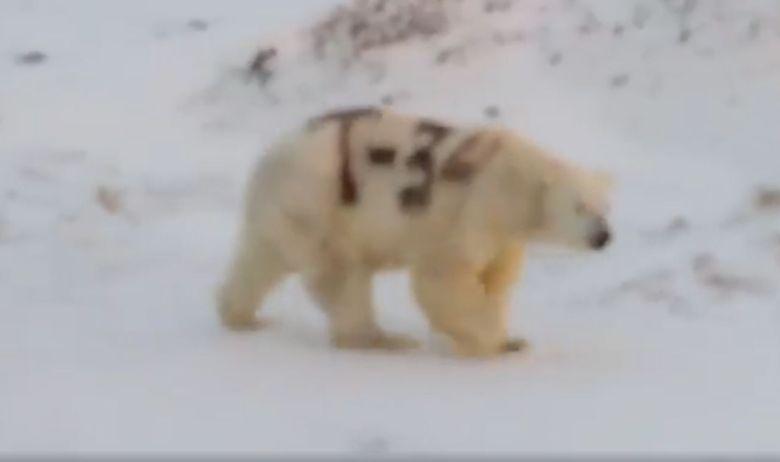 polarni medvjed oznaka