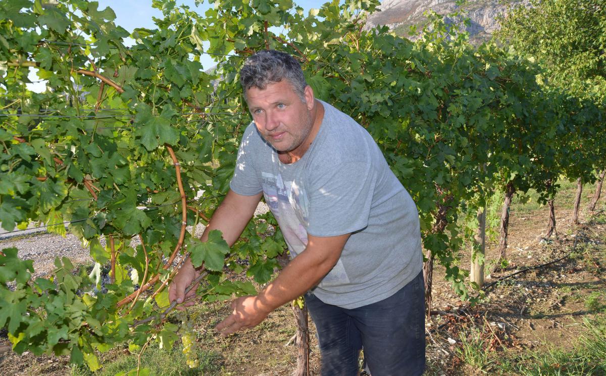 Niko Karaman zagovara ideju da se konačno 'popiše' sve grožđe u Konavlima