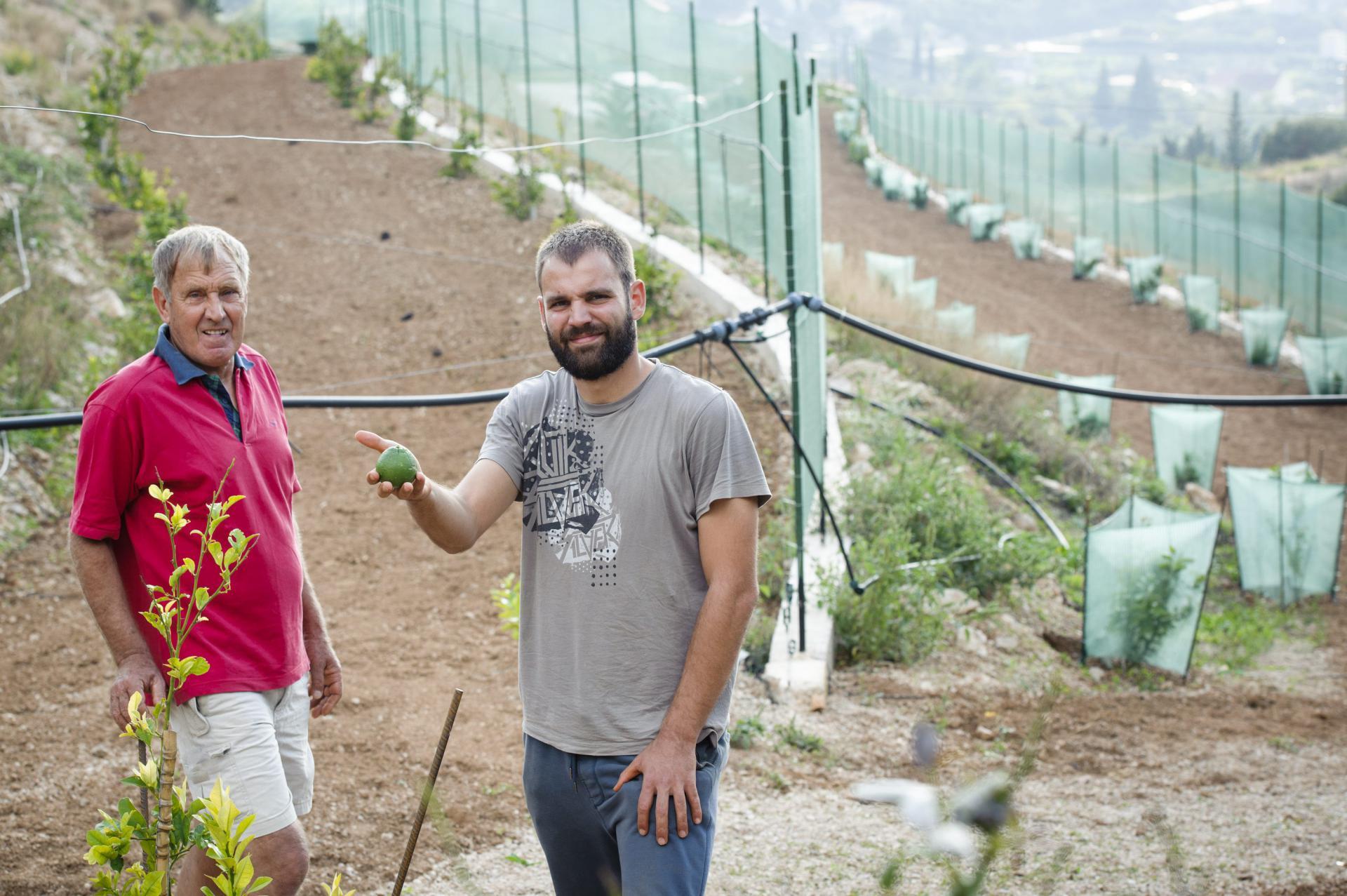 Slavomir i njegov sin Ante na novoj plantaži limuna