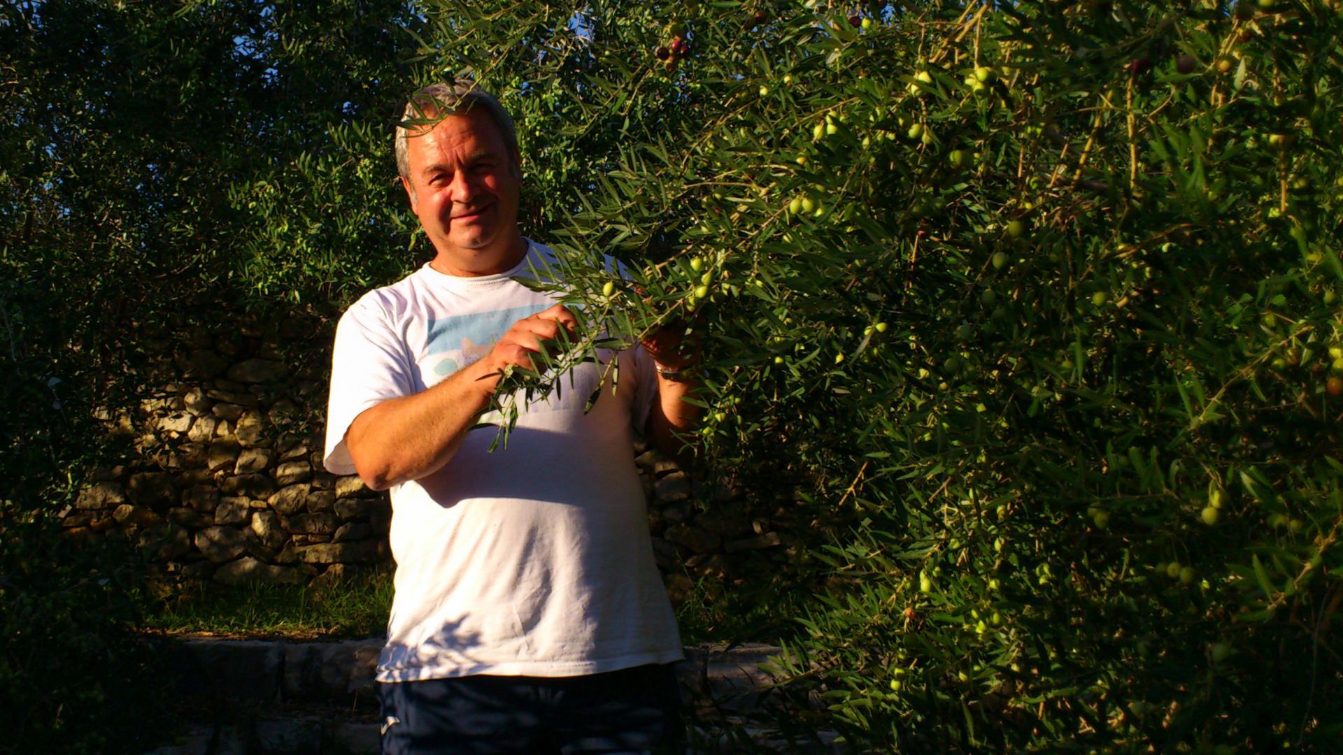 Dr. Ivica Vlatković među svojim maslinama