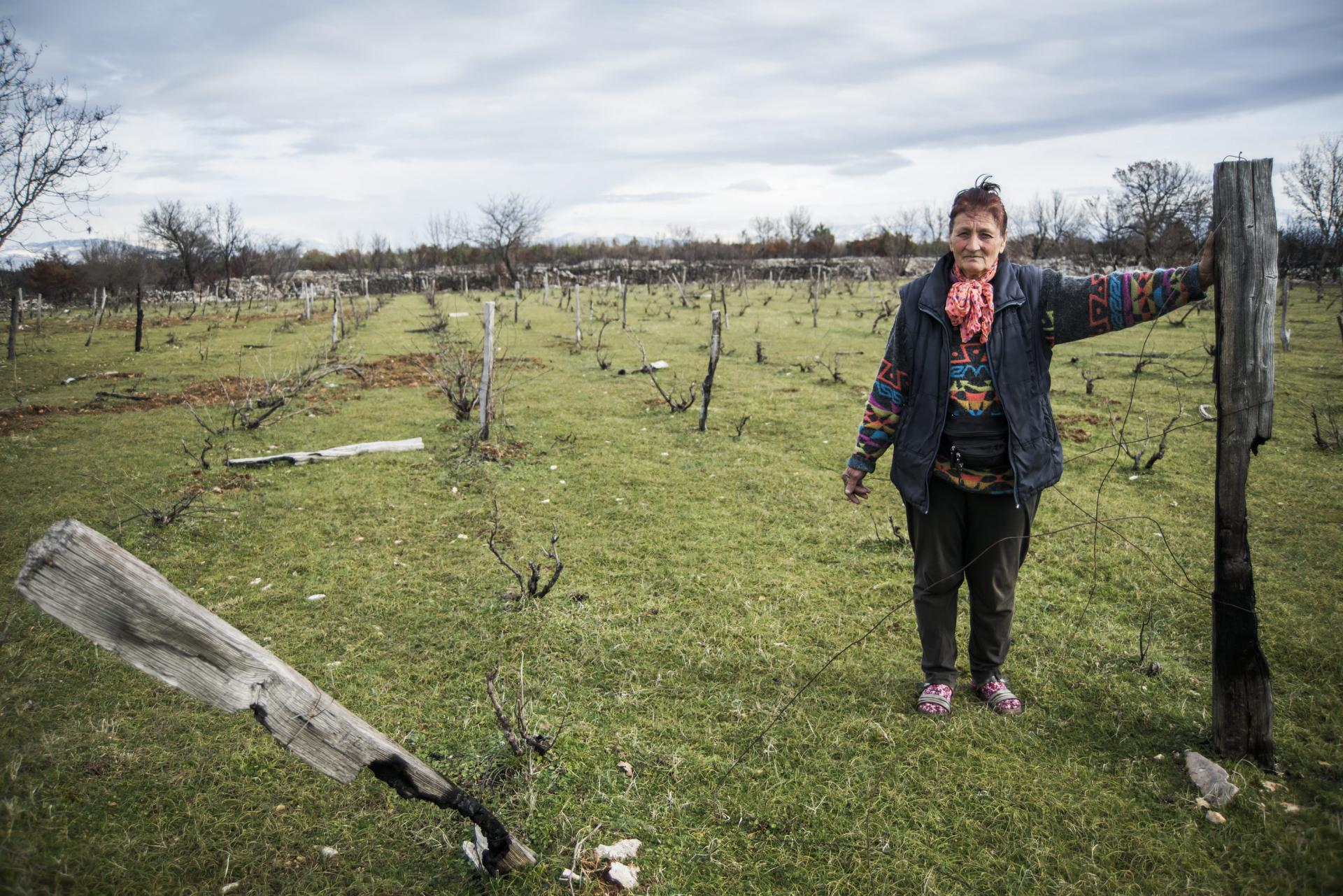 Milica Kosović: Evo što mi je od vinograda ostalo