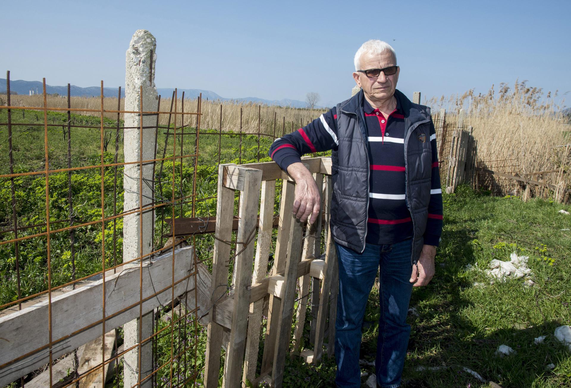 Ante Šunjic Tarzo na svojoj plantaži mandarina koju su uništile krave