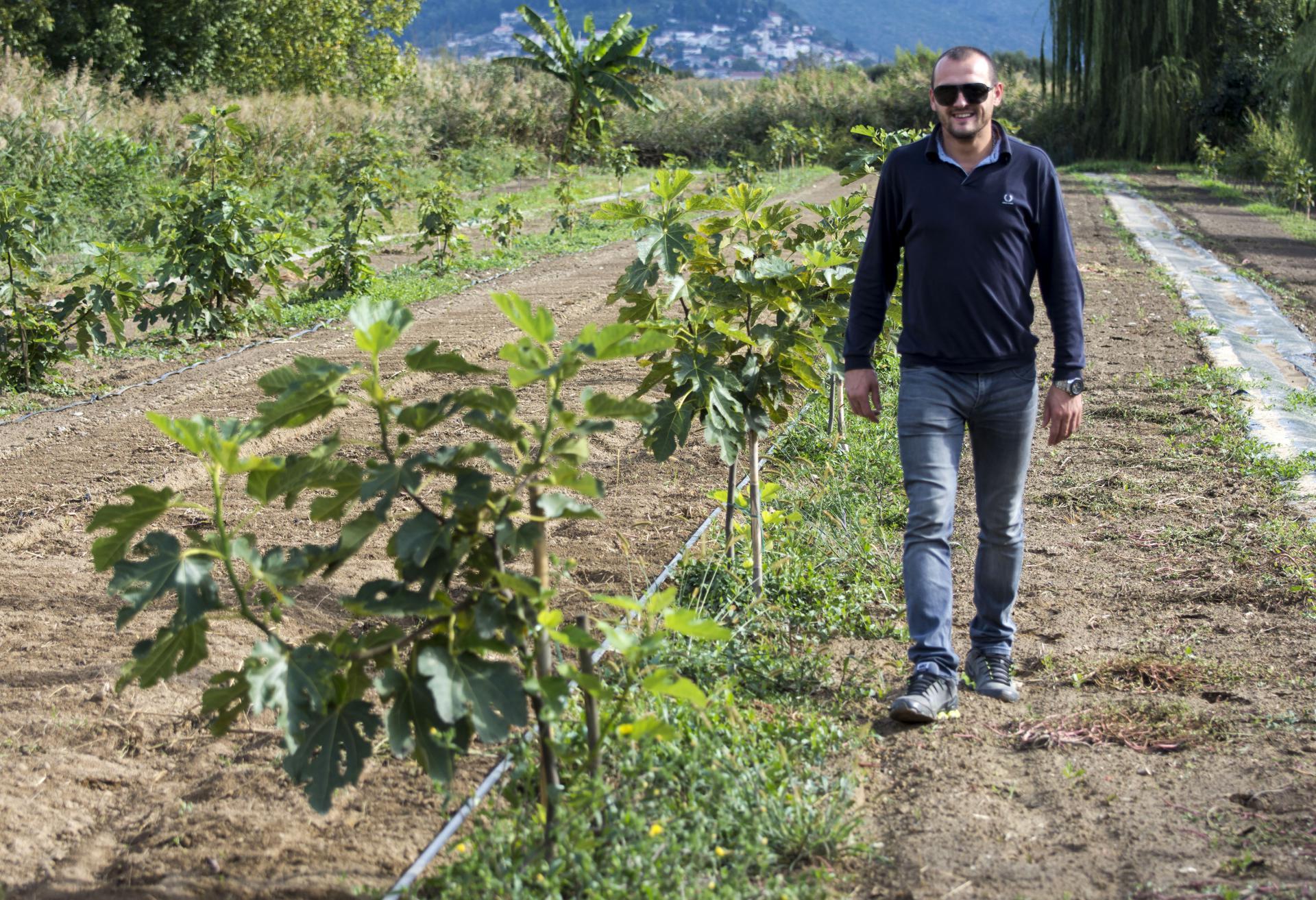 Tomislav Šiljeg, 31-godišnji metkovski uzgajivač smokava