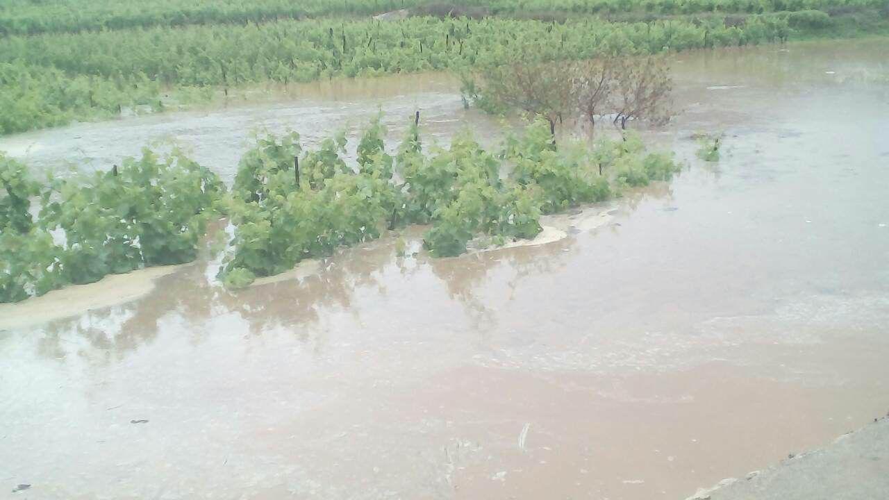 Korčulanski vinogradi pod vodom