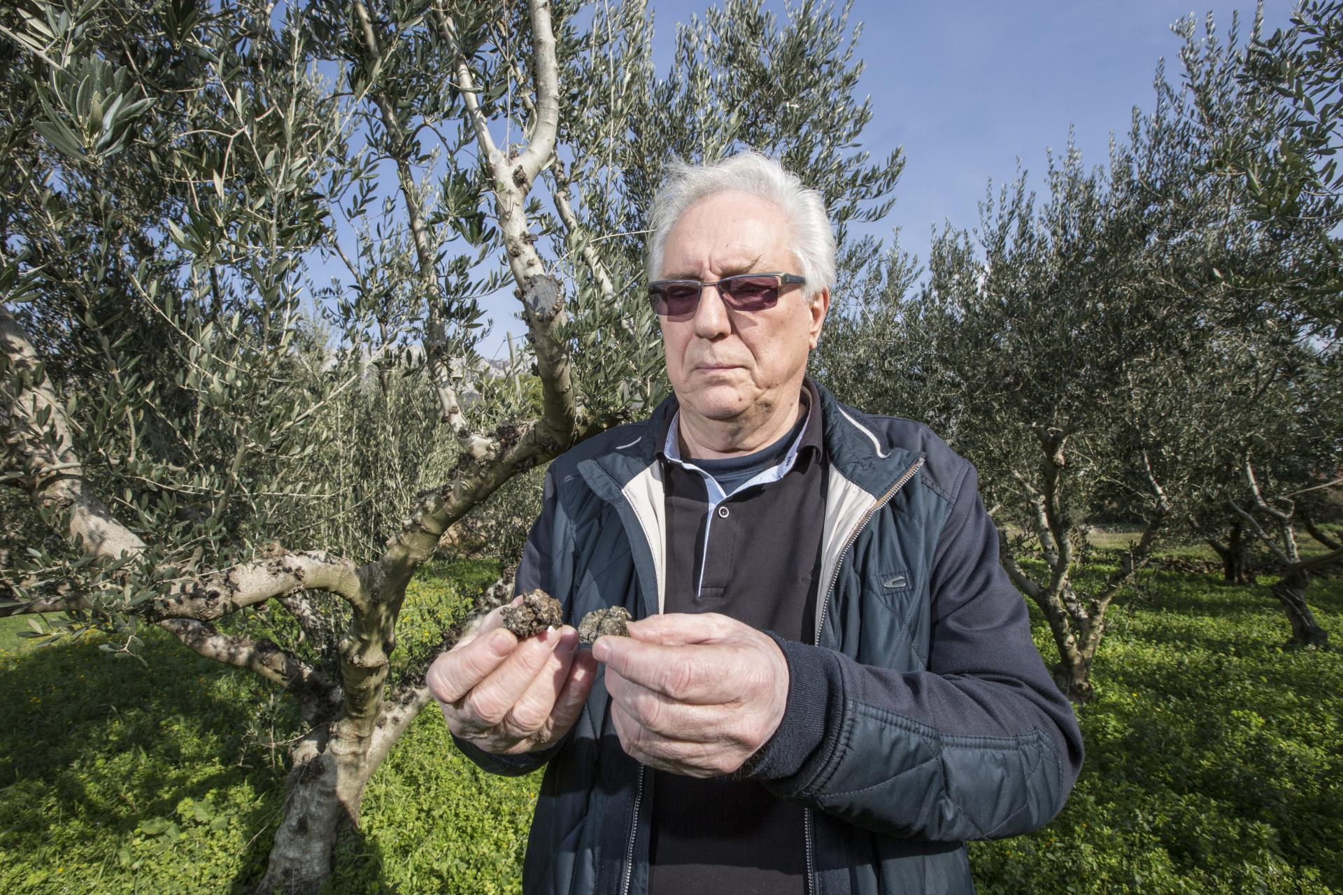 Dr. Mihovil Biočić s otrgnutim krastama masline oboljele od raka