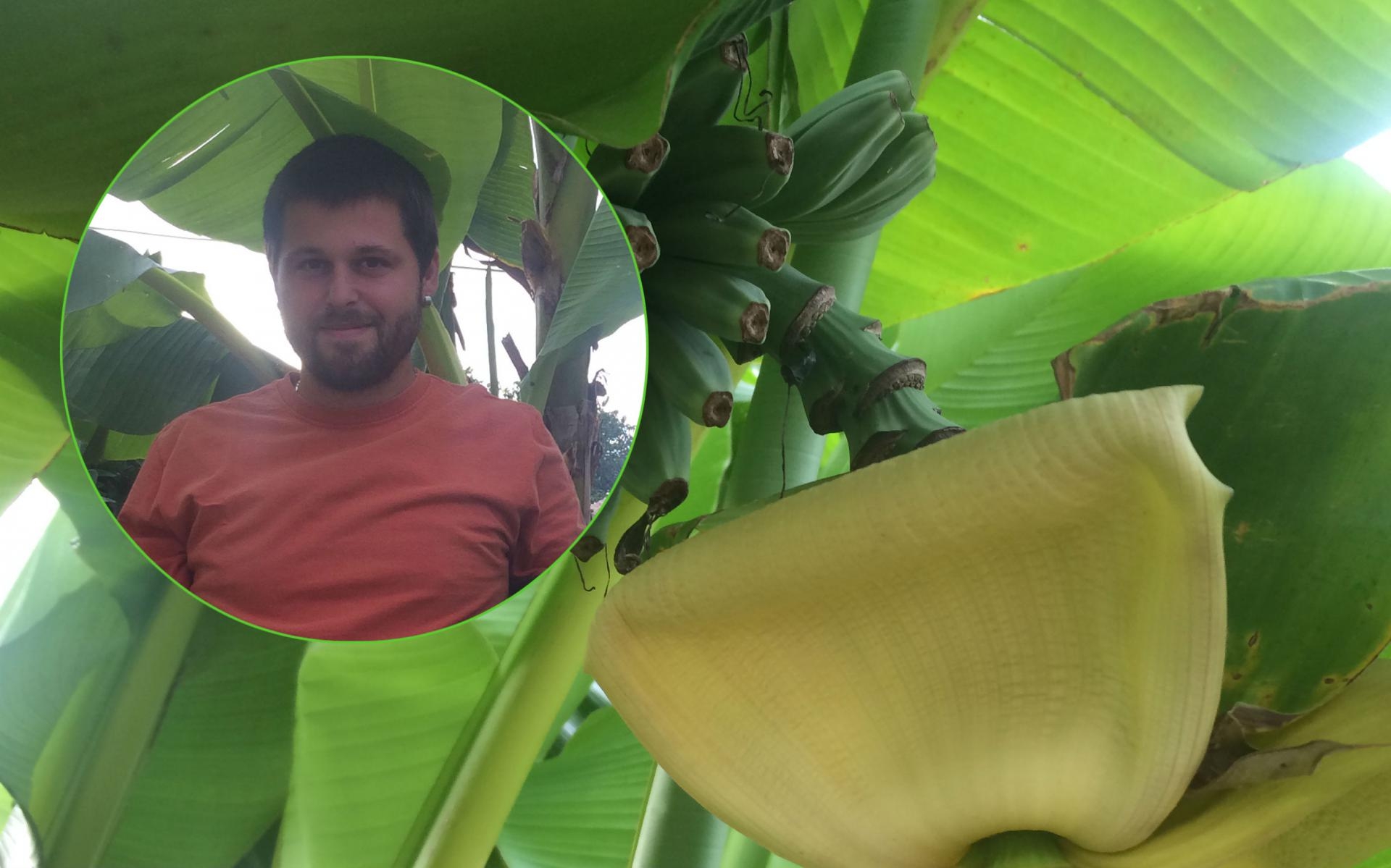 Emilio Jurjević i njegove banane