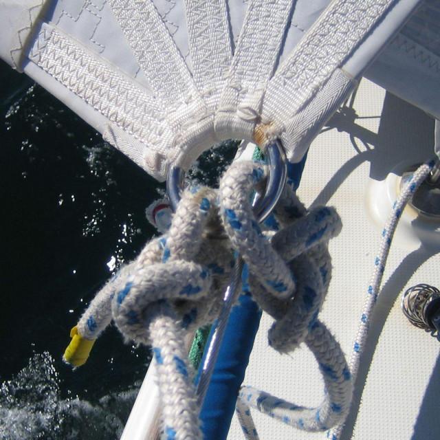 Škote vezane pašnjacima za rogalj floka