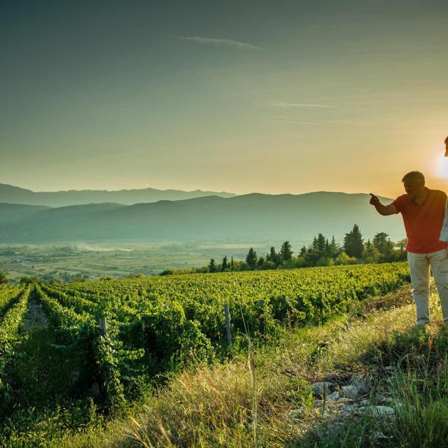 Imotski, Prolozac, 170919<br /> Reportaza o vinarima iz Imotske krajine.<br /> Na fotografiji: vinarija Grabovac, vinograd Vucja draga<br />