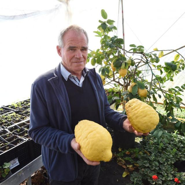 Bibinje, 070220.<br /> Veliki plodovi limuna kod Petra Sindije u njegovu rasadniku u Bibinjama. Najtezi od nekoliko danas ubranih imao je 1.71 kilogram.<br /> Na fotografiji: Petar Sindija, vlasnik rasadnika.<br />