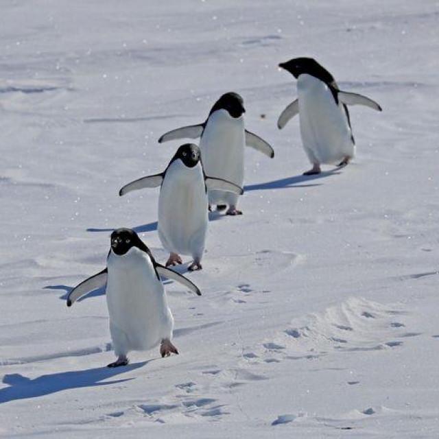 Pingvini na Antarktici