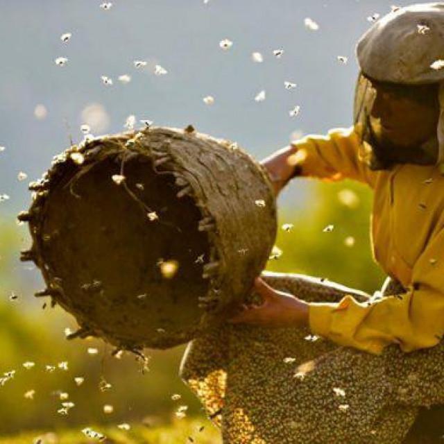 'Medena zemlja' priča jeposljednjoj uzgajivačici divljih pčela u Europi i njenim naporima da ih izbavi iz pohlepe domaćihpčelara