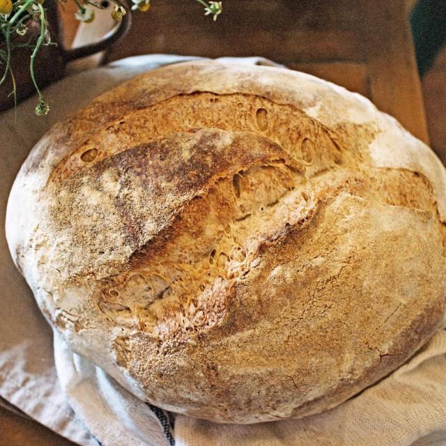 Kruh od divljeg kvasca