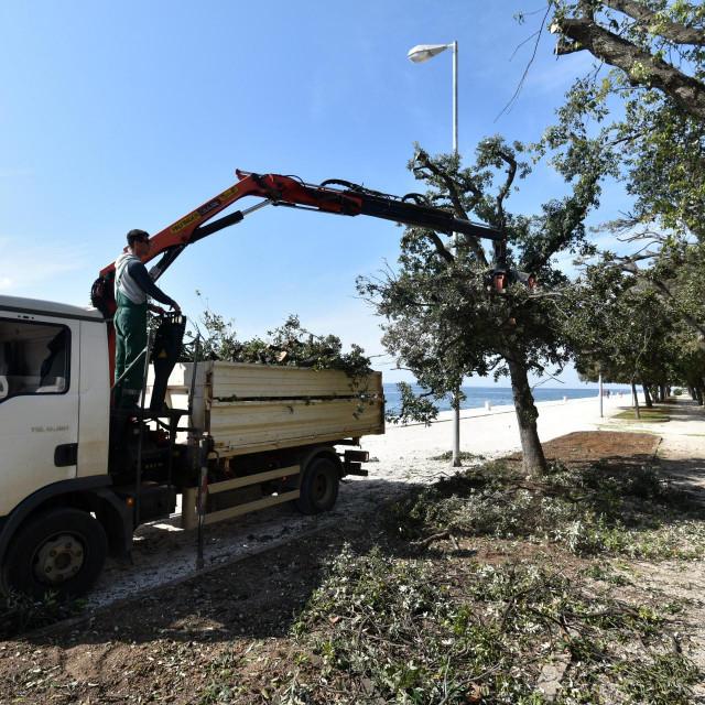 Djelatnici gradske tvrtke Nasadi režu vrhove krošnji crnika na rivi zbog bolesti koja je napala stabla i uzrokuje sušenje vrhova grana<br />