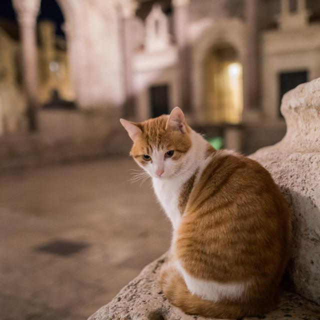 Ulice dalmatinskih gradova su prazne, pojavi se tek pokoja mačka