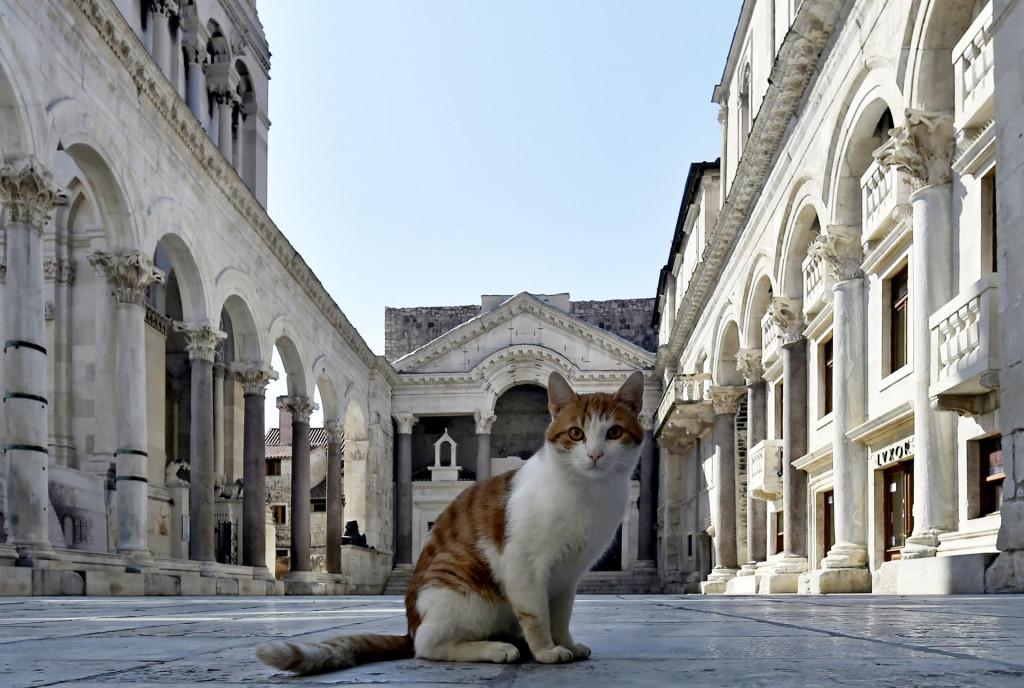 Peristil i mačka čekaju rasplet drame