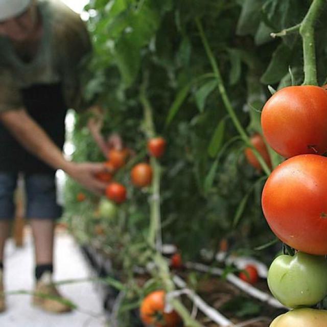 Radnici o kojima farmeri diljem Europe ovise dolaze iz drugih zemalja i sada ostaju bez njih.