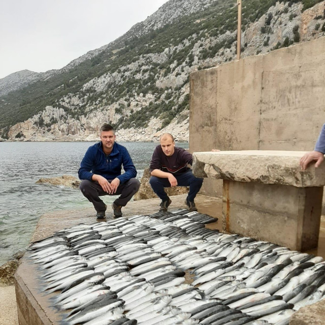 Pavo Andričević i Anto Poljanić, dobrotvori ioz Potomja, s ulovljenim cipolima
