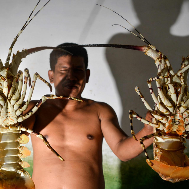 INDONEZIJA JASTOZI (Photo by CHAIDEER MAHYUDDIN/AFP)