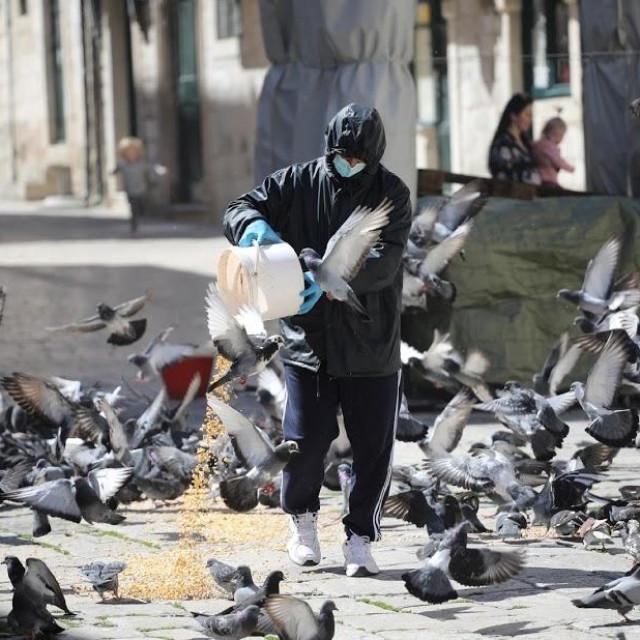 Hranjenje golubova svaki dan u podne na Gundulićevoj poljani
