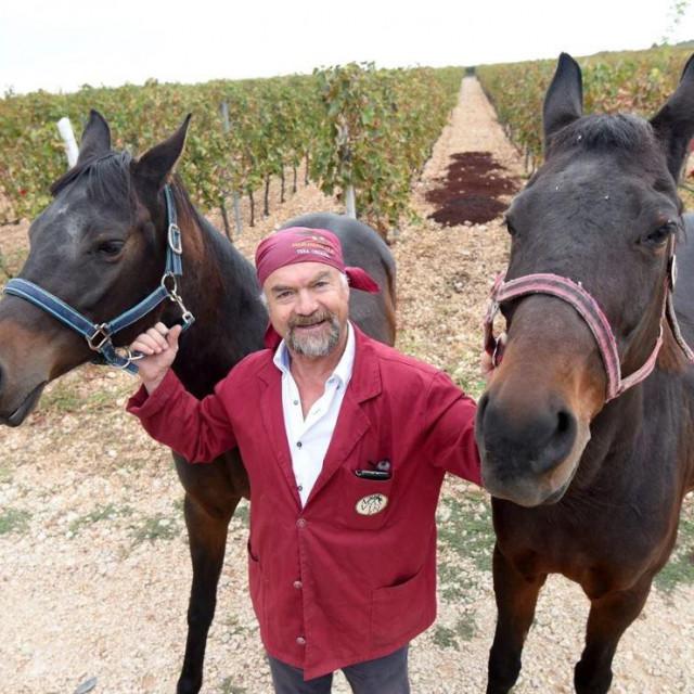 Radoslav Bobanović PZ Masline i vino