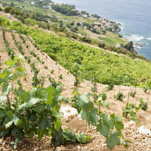 Ovo je doba intenzivnih radova u vinogradima, a da bi se do većine njih došlo, sada trebaju propusnice