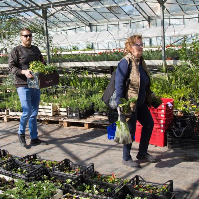 Građani kupuju sadnice direktno u stakleniku