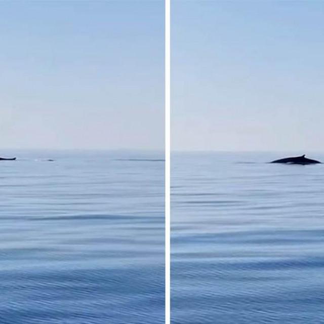 Ribari na pučini kod Rogoznice ugledali kitove