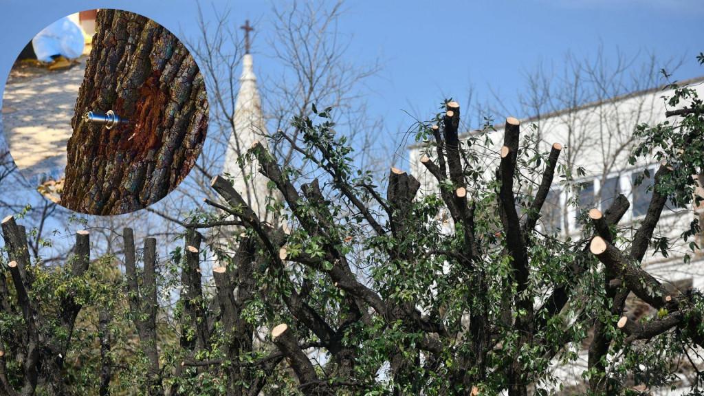 Što se zapravo događa sa stablima crnike koja preko 100 godina krase zadarsku rivu? Te kakva je sudbina same kamene ljepotice koja je prepuštena nemilosti vremena?