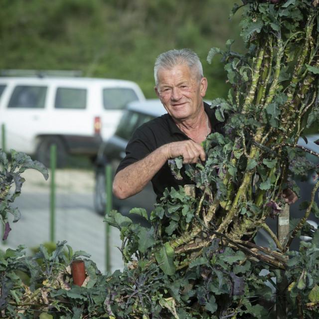 U vrtu u Solinu raste jedna od najvećih rašćika, dosegmila je gotovo četiri metra