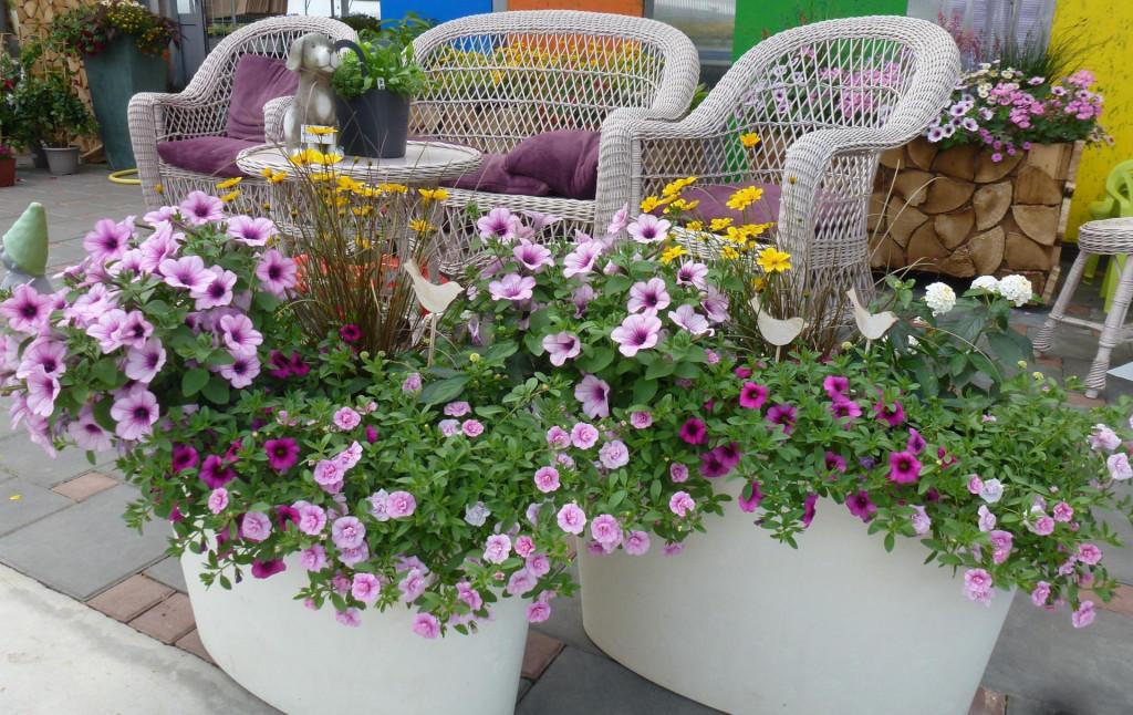 Milijun zvona i surfinije u ružičastim nijansama zajedno s bijelom lantanom i žutocvatećim bidensom lijepo ističu cvjetnu kombinaciju