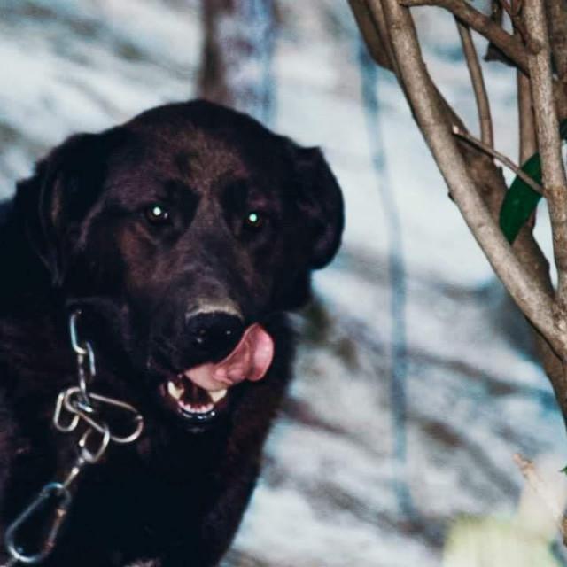 Ovo je Medo, pas kojemu se veselili cijela obitelj Poljak, a koji je nažalost stradao