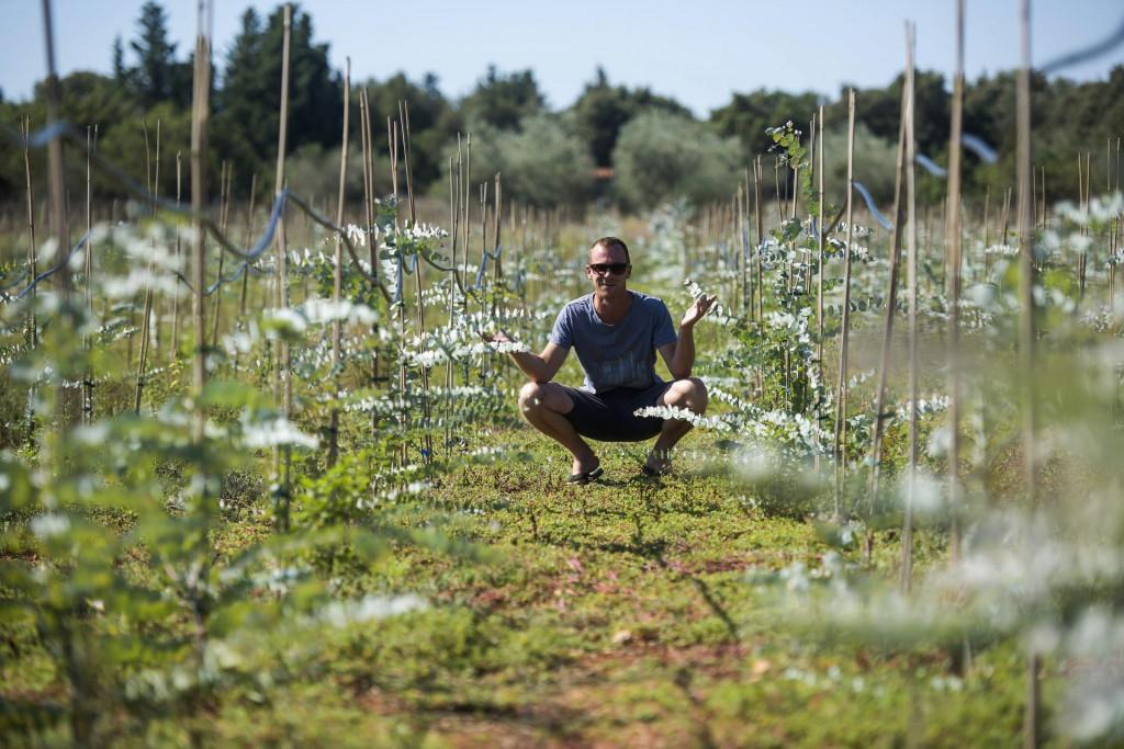 Marin Hrabrov iz mjesta Ugljan na otoku Ugljanu je posadio 4500 sadnica eukaliptusa