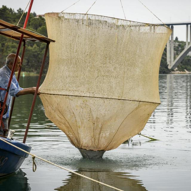 Skradinski ribolovci čokalice hvataju tako da prate u mreži kad će ući riba, pa je podižu u zrak