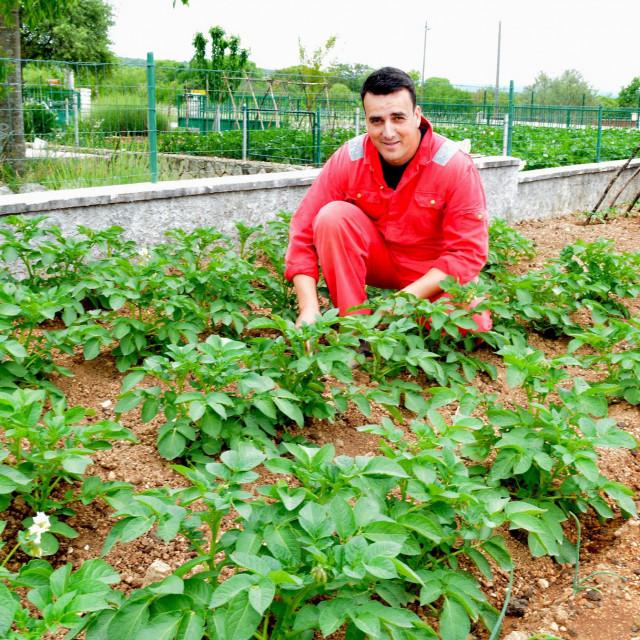 Pakovo selo-Rakici,160520.<br /> Sibenski dogradonacelnik Pasko Rakic svoje slobodno vrijeme provodi u svom vrtu na svojoj djeidovini. Radovi u vrtu su podjeljeni oni tezi s motikom i kosom su Paskini, a oni s lasunicem i cvijecem su Goranin.<br />