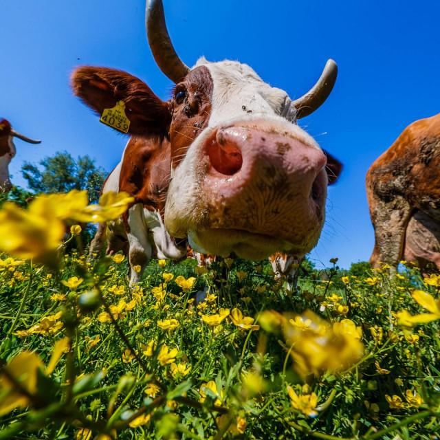 Stočarstvo, kao i ostale grane poljoprivrede, u kolapsu je