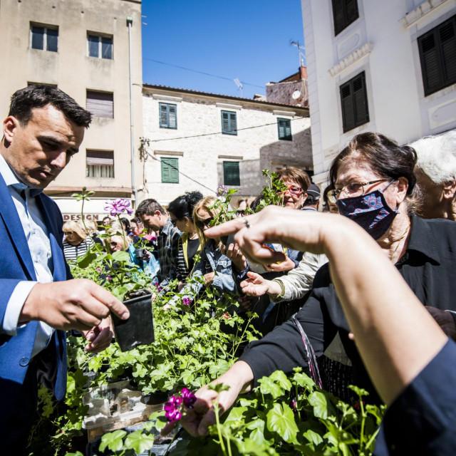 Sibenik, 260520.<br /> Na Maloj lozi podjela tisucu besplatnih sadnica djirana koju je organiziralo komunalno poduzece Zeleni grad i sibenska Turisticka zajednica.<br />