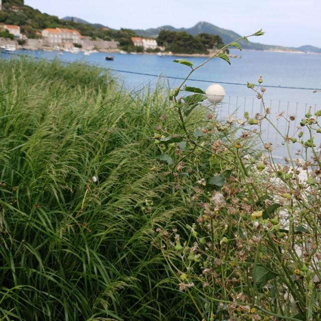 Stanovnici Koločepa upozoravaju na neprimjeren izgled okoliša sanitarnog objekta na otoku