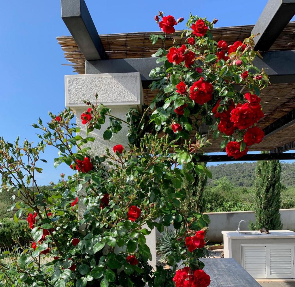 Ukrašavanje otvorenih prostora, s ružama ne možete pogriješiti